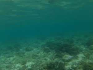 terumbuh karang bawean