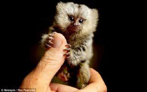 Bayi Alien Tertangkap Dengan Perangkap Tikus, Masih Misterius