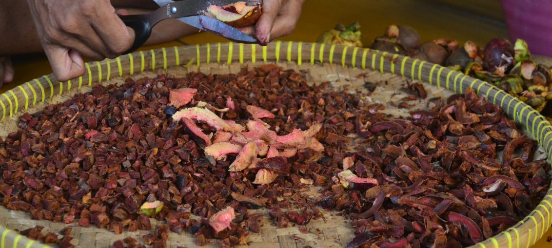 Photo : Proses perajangan kulit manggis sebelum di keringkan, disangrai dan digiling menjadi serbuk kopi